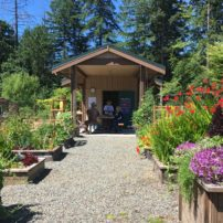 The shed and raised demo beds