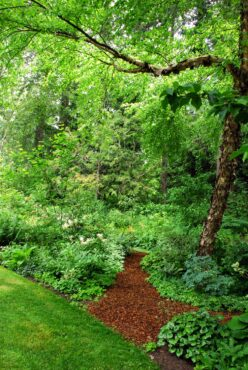 Eastern wet garden area with a gorgeous river birch