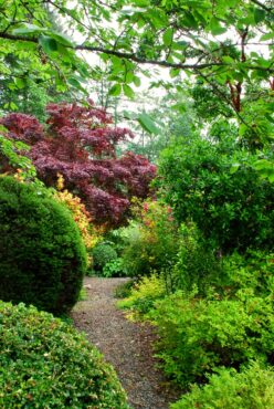 Path through the southern garden