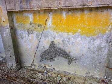A section of the bulkhead built to protect the bank from erosion. The orange color is a marine lichen.
