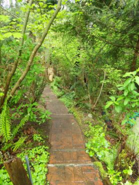 A cool green path leads down into Philips' native plant garden.