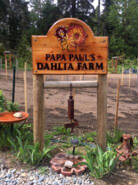 Papa Paul's Dahlia Farm