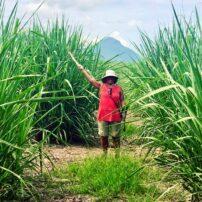 A hike through the tall sugarcane fields