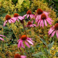Garden Cornucopia