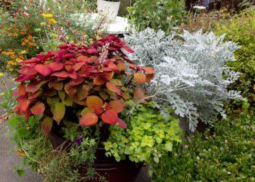 Brunton's art is reflective of her garden's splashes of color palette.
