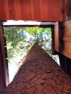 A tree runs through it — TreeHouse Point