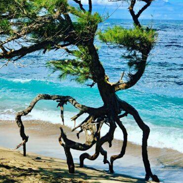 'Dancing Tree' — Waihee Beach, North Maui
