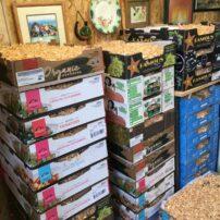 Dahlia storage boxes in the garage