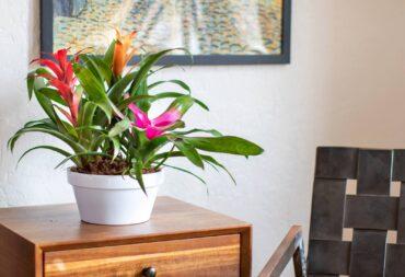 yoga plants
