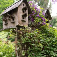 The Joy of Gardening