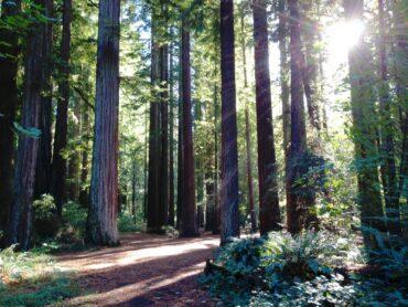 Redwoods National Forest