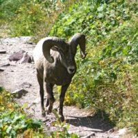 Wildlife encounters, Big Fork, Montana