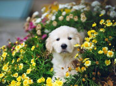dog friendly plants