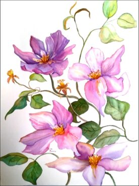 """""""Clematis,"""" watercolor by Myrna Binion"""