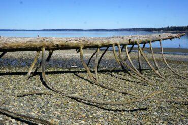 Beach at Harstine Island State Park