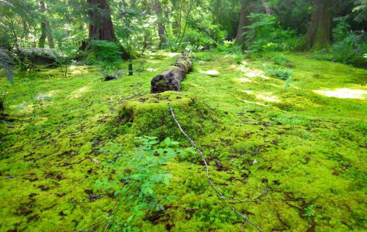 A wild garden floor carpeted in moss