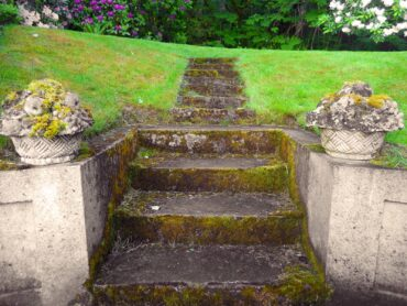 Old concrete stairs accented by moss