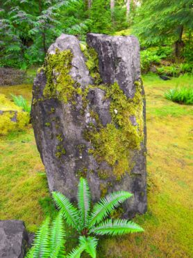 Some moss species are adapted to growing on solid rock.
