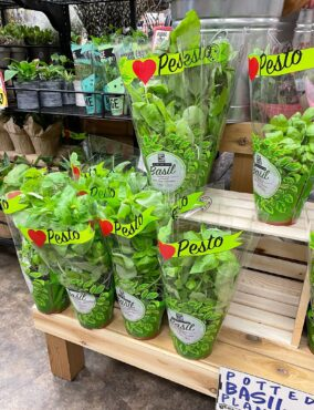Basil for sale
