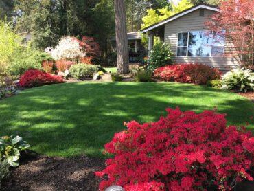 Spring azaleas (Photo courtesy Stan Noel)