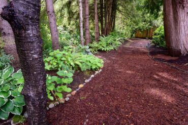 Fern garden (Photo courtesy Stan Noel)