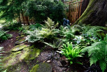 Bhudda in fern garden (Photo courtesy Stan Noel)