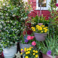 Barb Grams Garden