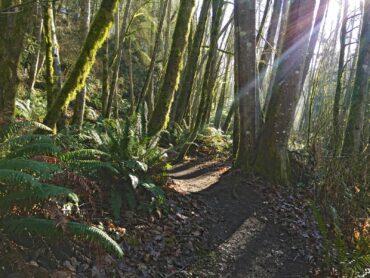 Shinglemill Trail (Photo courtesy Vashon-Maury Island Land Trust)